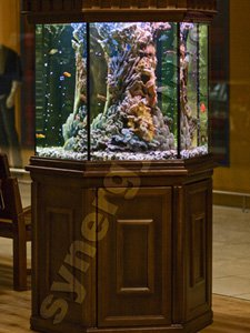 Design and decoration of aquariums Kiev