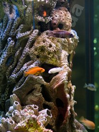 the freshwater aquarium Kiev